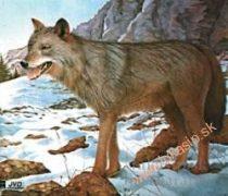 Papierový terč vlk