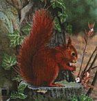 Papierový terč veverička