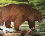 Papierový terč medveď