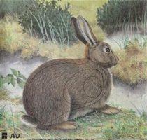 Papierový terč králik